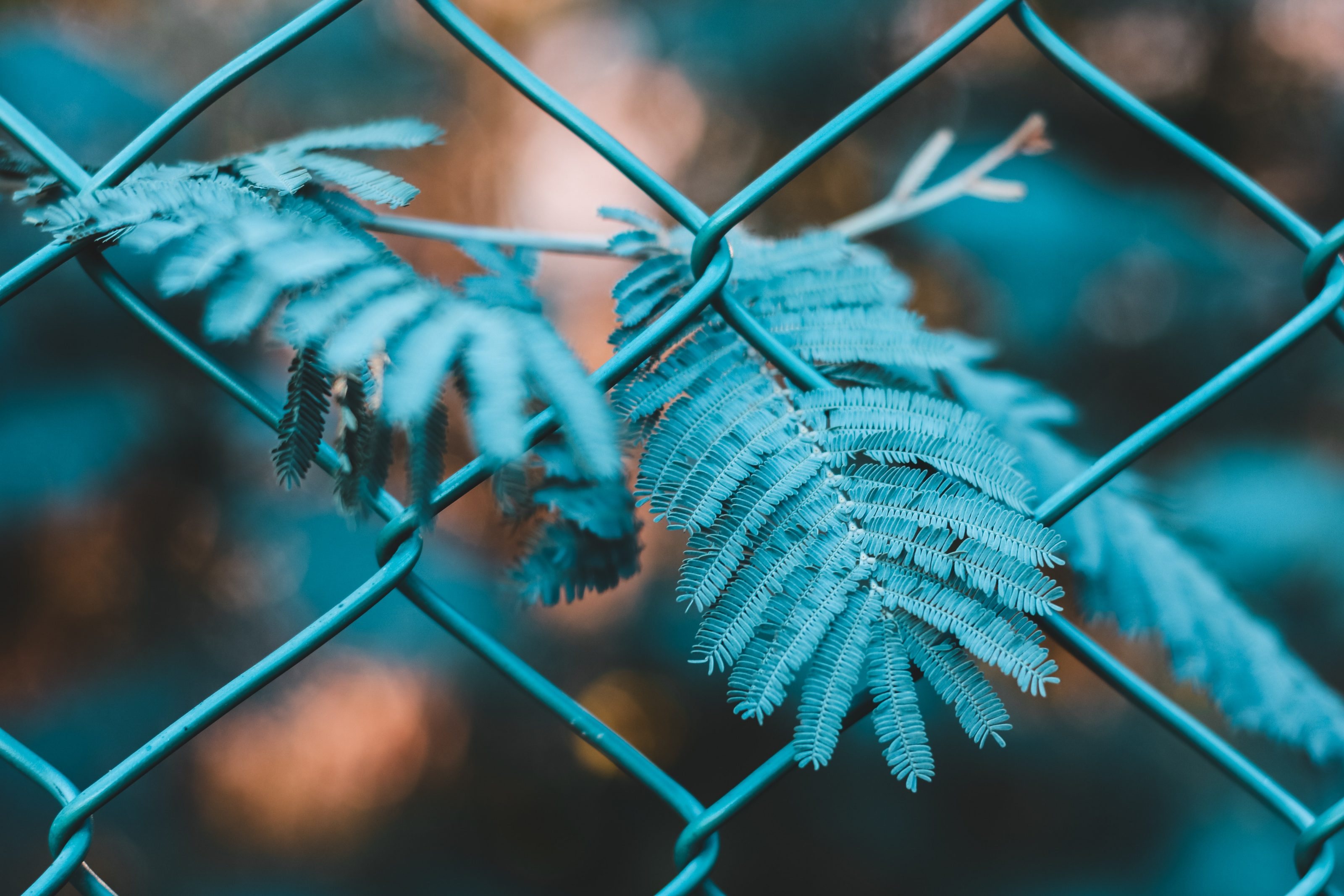chain-link-fence-fence-leaves-2166641